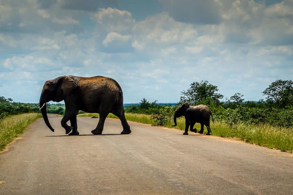 South Africa Kruger National Park Elephant