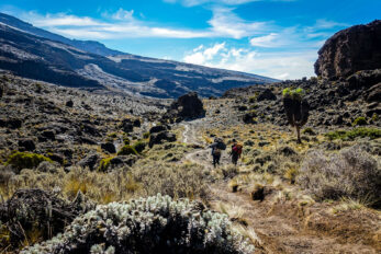 Climbing Kilimanjaro From Big Tree Camp To Baranco Camp Tobinka